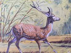 "Neave Parker (1910-1961) - Original illustration ""Spotted dear"" - early 1950s"