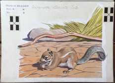Neave Parker (1910-1961) - Originele illustratie 'Antelope ground squirrel' - beginjaren '50