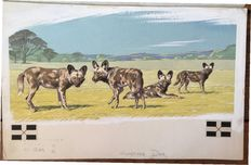 "Neave Parker (1910-1961) - Original illustration ""Hunting dogs"" - early 1950s"