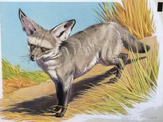 "Neave Parker (1910-1961) - Original illustration ""Bat-eared fox"" - early 1950s"
