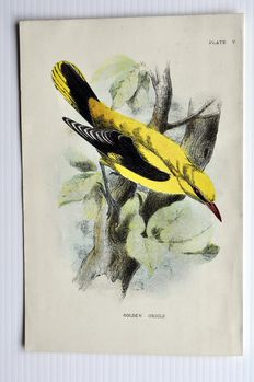 10 ornithological prints by Richard Bowdler Sharpe (1822 – 1909) - A Handbook to the Birds of Great Britain, 1897