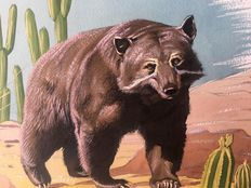 Neave Parker (1910-1961) - Originele illustratie 'Spectacled bear' - beginjaren '50
