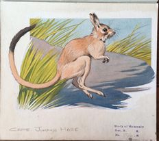 "Neave Parker (1910-1961) - Original illustration ""Cape jumping hare"" - early 1950s"