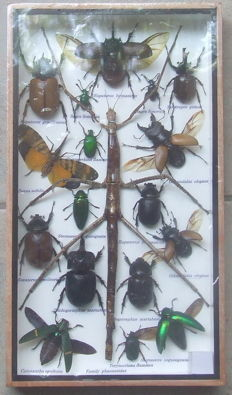 Diverse collection of exotic Insects - 35 x 20cm