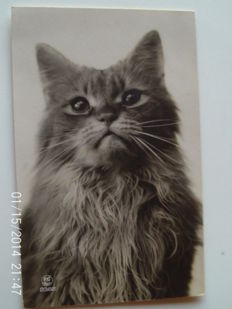 lot of 55 cards on the theme of the cat