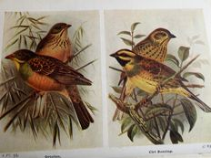 Lot of 4 Volumes on Birds and Wild Life of the British Isles - 1920/28.