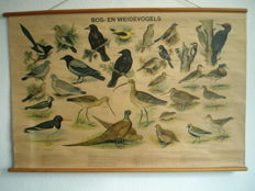 School map forest and meadow birds of H. Slijper from 1953 with 30 beautiful birds
