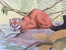 "Neave Parker (1910-1961) - Original illustration ""Water genet"" - early 1950s"