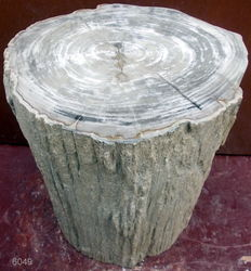 Side table made from a trunk piece of petrified wood - 40 x 31.5 x 27 cm - 60.6 kg