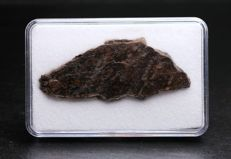 Sayh Al Uhaymir 566 - Carbonaceous - Chondrite CV3 - Meteorite slice from the Sultanate of the Oman - 4.70 x 2.00 cm - 3.90 g