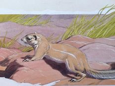 "Neave Parker (1910-1961) - Original illustration ""West African ground squirrel"" - early 1950s"