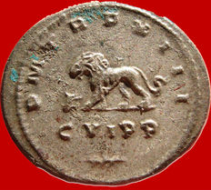 Roman Empire -  Gallienus (253-268) silver antoninianus ( 4,36 g , 22 mm) Antioch mint, 264-265 A.D. P M TR P XIII. CVIPP and palm. Lion