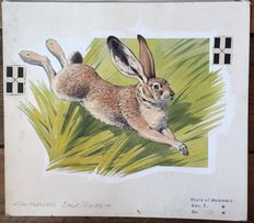 "Neave Parker (1910-1961) - Original illustration ""Californian jack-rabbit"" - early 1950s"