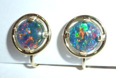 Clip earrings in 585 / 14 kt gold with colourful, shimmering opals for clip-wearer with ear screws.