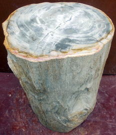 Solid side table from a trunk of petrified wood - 40 x 28 x 29.5 cm - 53 kilo