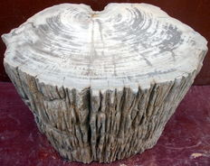 Side table from a trunk of petrified wood - 35.5 x 40 x 26.5 cm - 68 kg