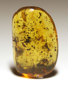 Burmite amber with insects - 27 x 17mm