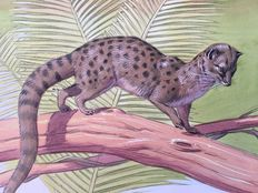 Neave Parker (1910-1961) - Originele illustratie 'Two spotted palm civet - beginjaren '50
