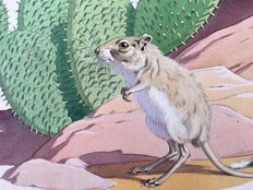 "Neave Parker (1910-1961) - Original illustration ""Kangaroo rat"" - early 1950s"