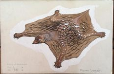 Neave Parker (1910-1961) - Originele illustratie 'Flying lemur' - beginjaren '50