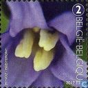 Common Bluebell Anters
