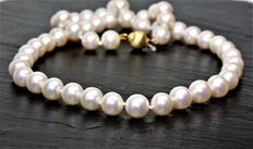 Freshwater round cultured pearls diameter 8 - 8.5 mm - clasp in yellow gold 750/000