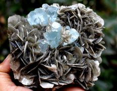 Damage free Transparent Aquamarine Crystal Cluster with Muscovite Mica - 105 x 100 x 68mm - 784 gm