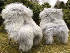 Lot with 2 very large - real - grey/blue longhair Icelandic sheepskins/lambskins