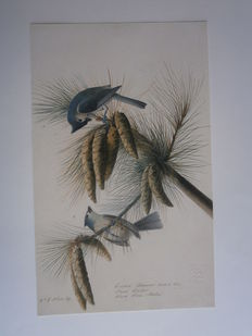 Roberta J.M. Olson - Audubon's Aviary. The Original Watercolors for The Birds of America - 2012