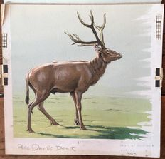 "Neave Parker (1910-1961) - Original illustration ""Pere David's deer"" - early 1950s"