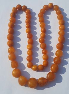 Old amber necklace of butterscotch coloured Baltic amber, 49 gram.