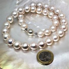 Cultured freshwater round pearls diameter 10.3 x 11.7 mm - magnetic clasp silver 925