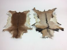 Fine pair of rustic, long-haired Goatskin rugs - white/beige/brown/black - 102 and 106cm  (2)