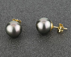 Yellow gold earrings with natural cultured Tahitian pearls measuring 11.30 mm in diameter