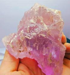 610 Grams Collector Choice Transparent Kunzite Crystal.