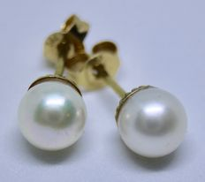 Earrings, 585 yellow gold, fine ivory white Japanese Akoya ivory white pearls with good lustre and gold pins. Very good condition.