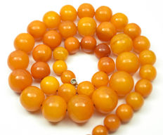 Baltic Amber necklace with box old honey butterscotch egg yolk colour, vintage, 54 gram