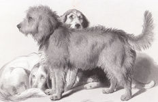 Three prints on dogs - Sir E. Landseer (1802 - 1873) Waiting - The three dogs and P. P. Rubens (1577 - 1640) Hunde Studiën