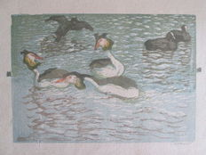 Two prints of Emil Pottner (1872-1942) - Futen in het water - Zwemmende meerkoeten