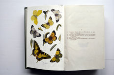 W. Egmont Kirby - Butterflies and Moths of the United Kingdom - ca. 1930