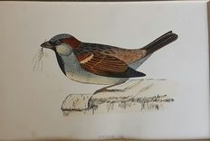 11 ornithological prints from Morris' British birds
