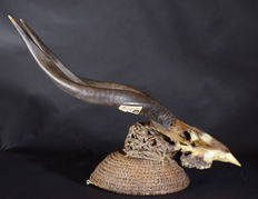African Tribal Boulou or BULU Headcrest with Sitatunga skull and horns. Democratic Republic Congo.