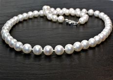 Necklace of freshwater round cultured pearls, diameter 7-8 mm – lobster clasp in 925 silver