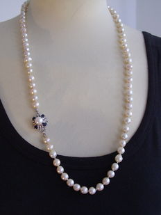 Long genuine, high value Japanese akoya pearl necklace on 14 kt gold clasp with sapphires