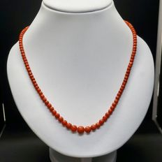 Precious coral necklace with gold clasp