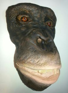 Unusual Chimpanzee death-mask - Pan troglodytes - 15 x 10.5 x 7cm