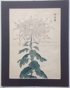 "Large pastel coloured woodcut in a dark grey passe-partout from the print series ""100 chrysanthemums of Keika"" by Hasegawa Keika (active fro 1892-1905) - Japan - 1893."