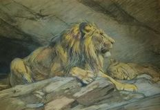 Unknown/probably Hans Krause (1863-?) - Lion Sketches