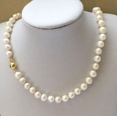 Pearl necklace made of large, white, Akoya pearls with a gold clasp.