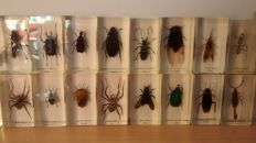 Interesting collection of Insects in resin blocks - 110 x 46mm and 70 x 40mm  (39)